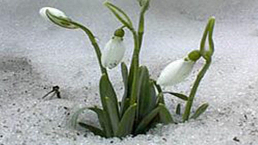 L'hiver est fini, compte-rendu et annonces